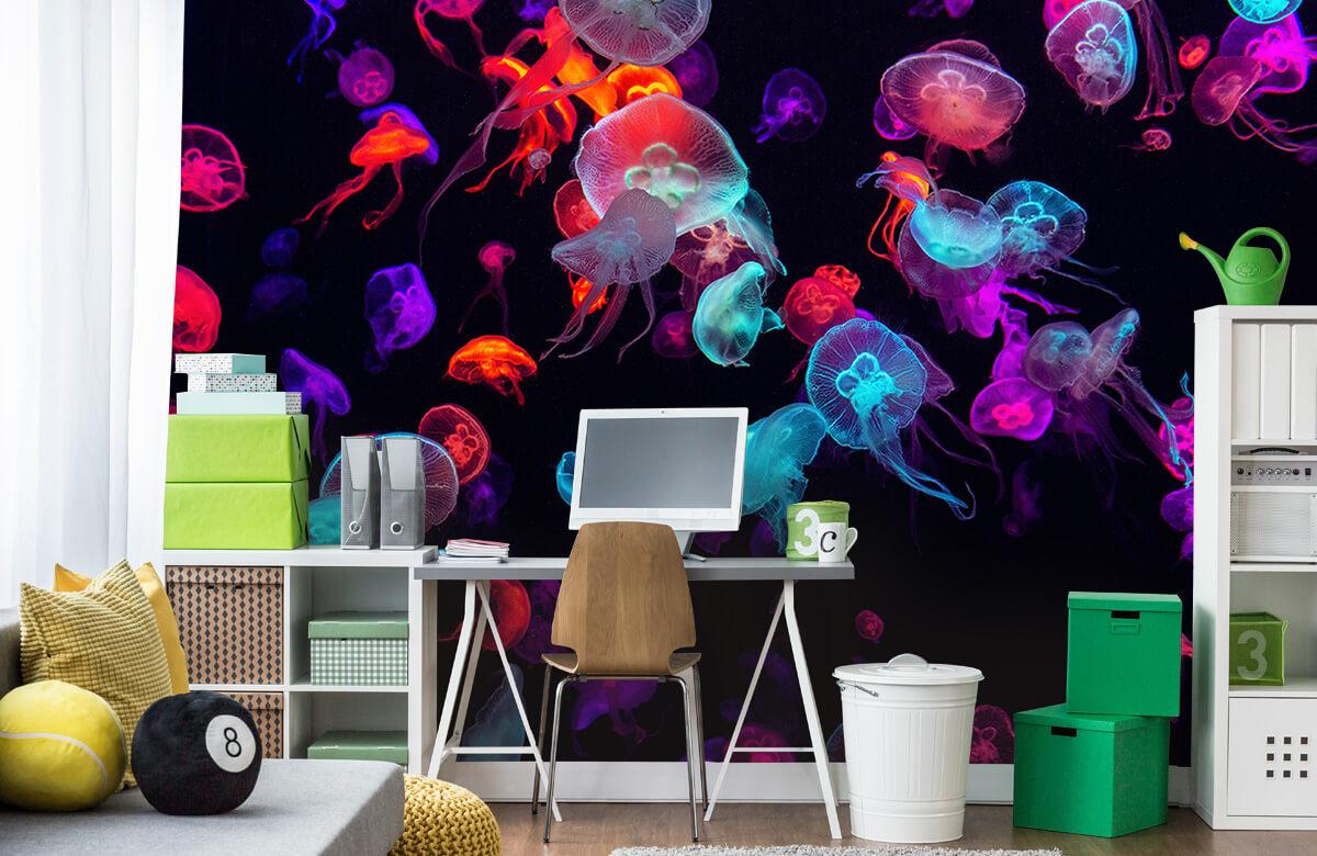 Animals Coloured jellyfish 9