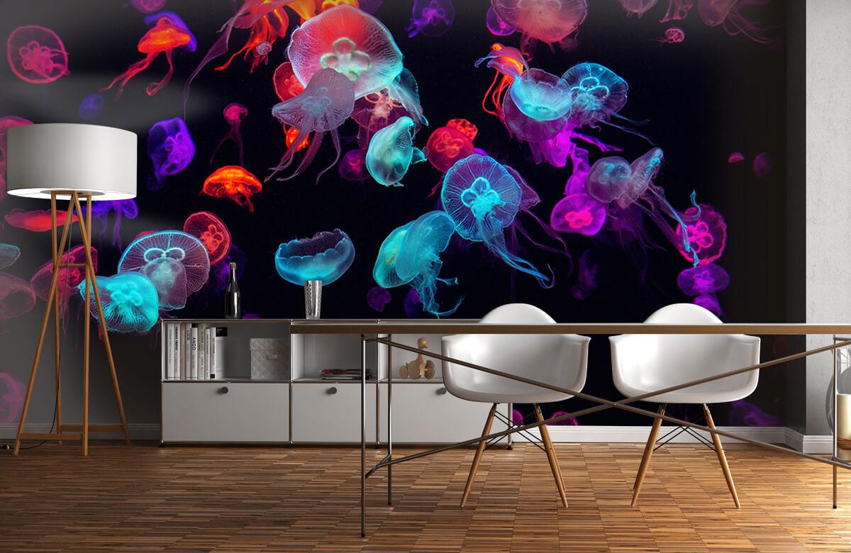 Animals Coloured jellyfish 11