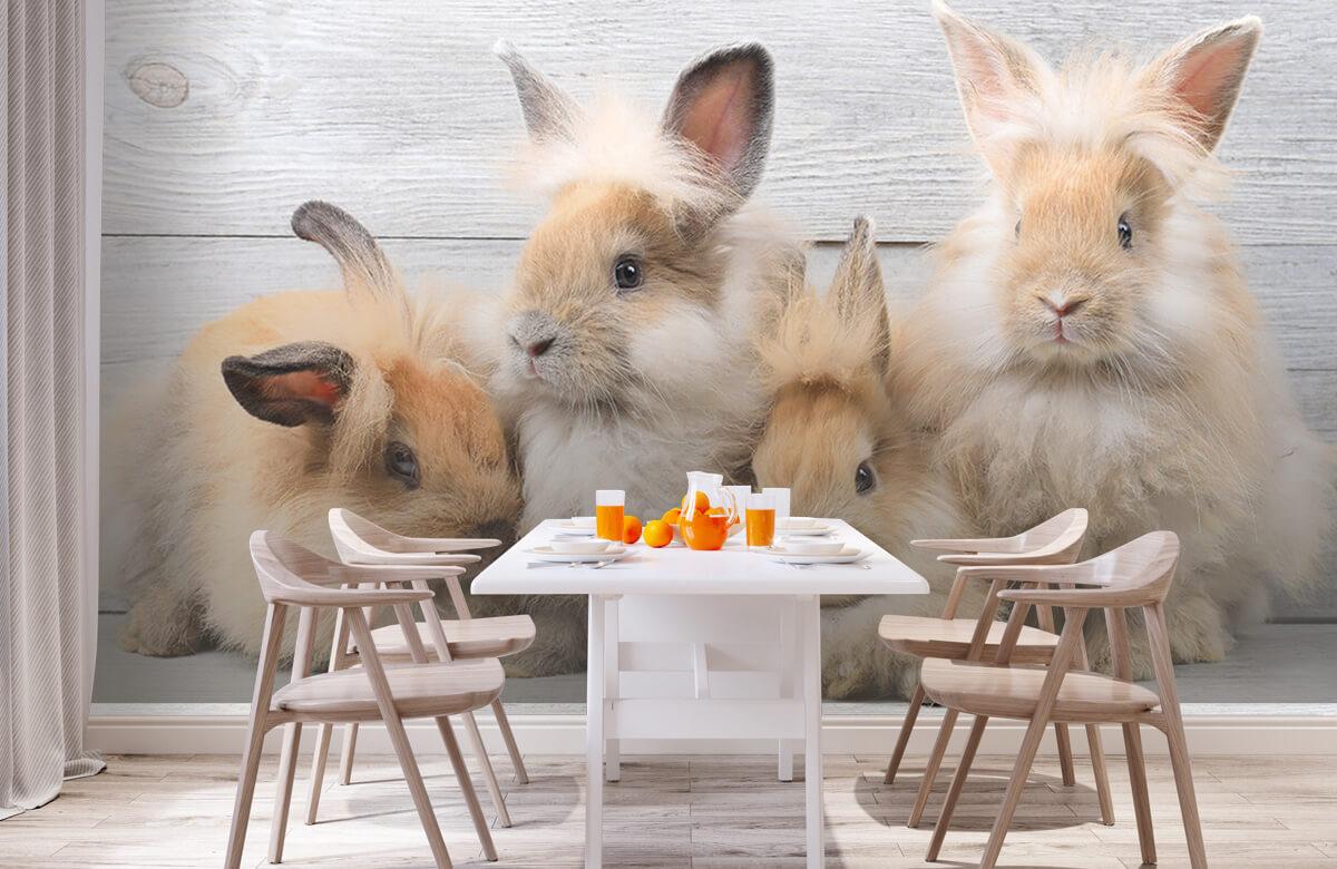 Wallpaper Small bunnies 3