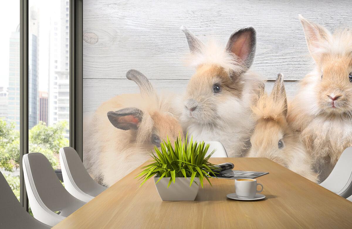 Wallpaper Small bunnies 6