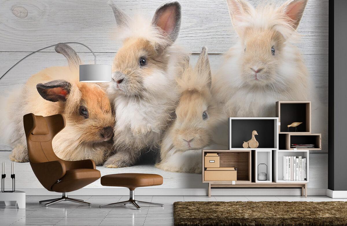 Wallpaper Small bunnies 7