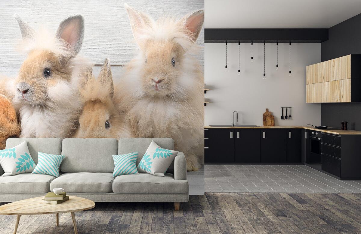 Wallpaper Small bunnies 8