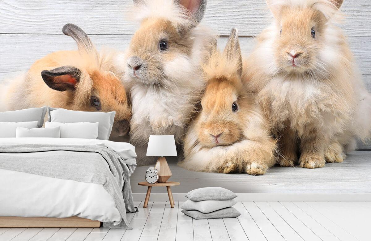 Wallpaper Small bunnies 9