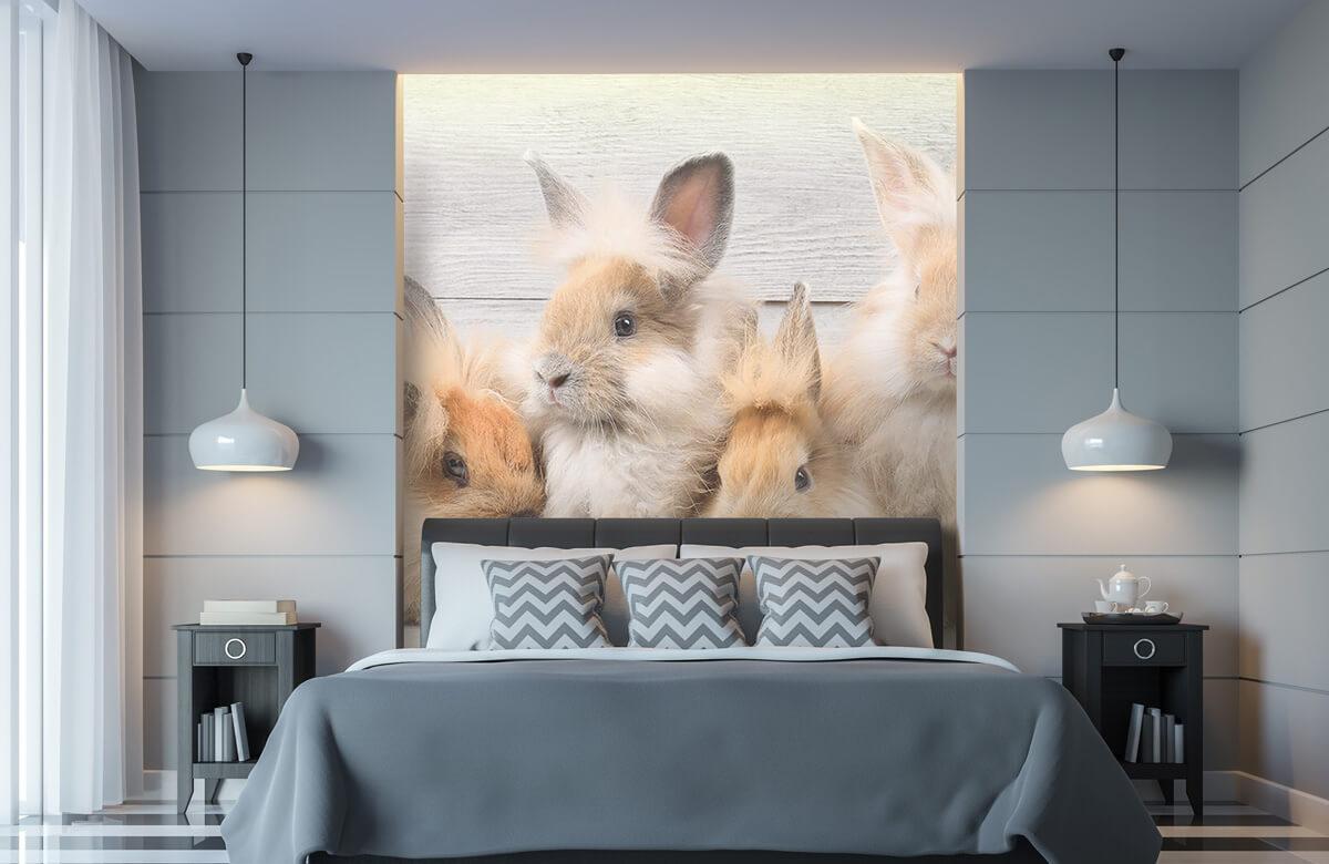 Wallpaper Small bunnies 11