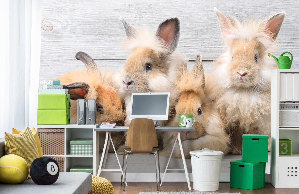 Wallpaper Small bunnies 4