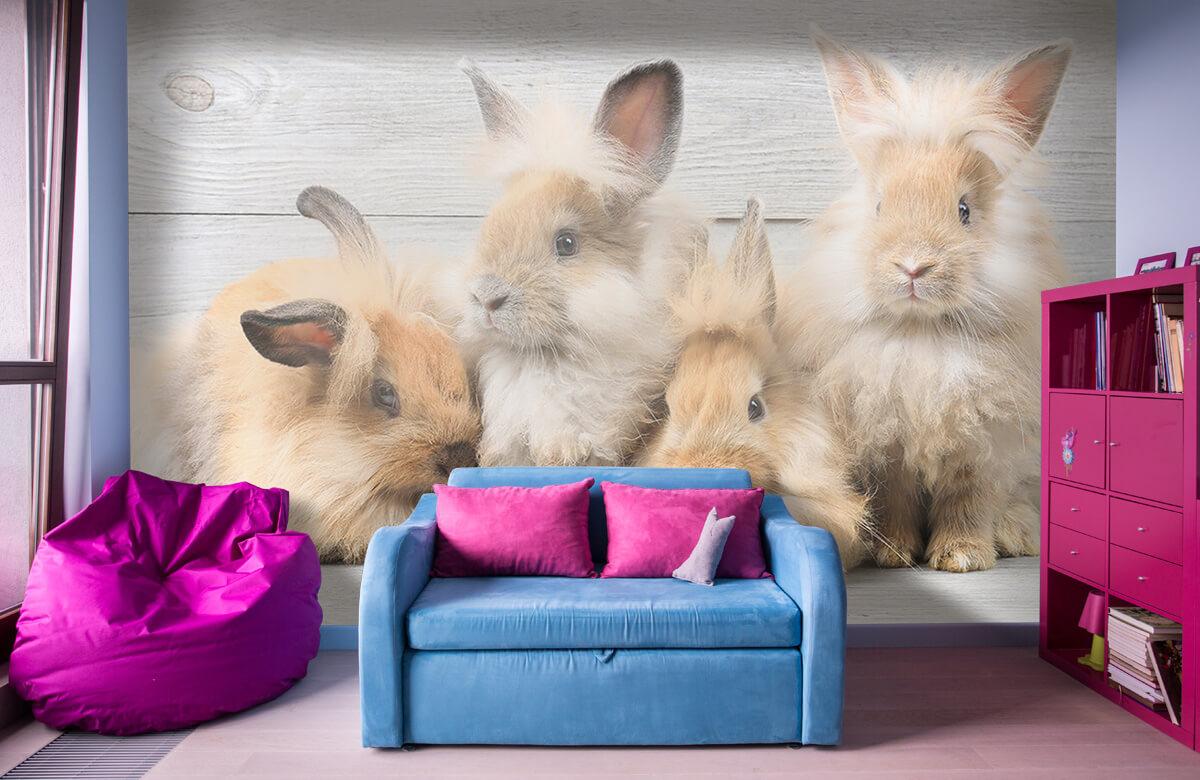 Wallpaper Small bunnies 1