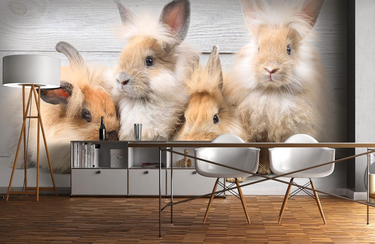 Wallpaper Small bunnies 10