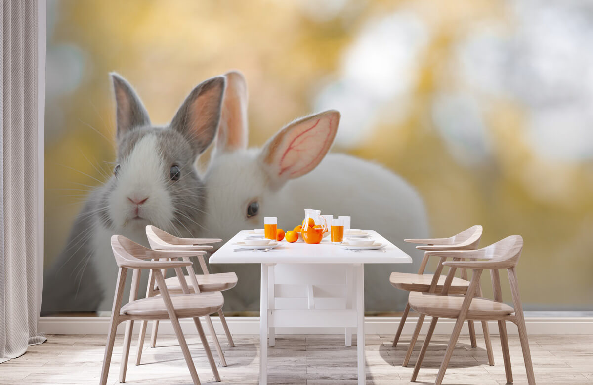 Wallpaper Close-up of rabbits 3