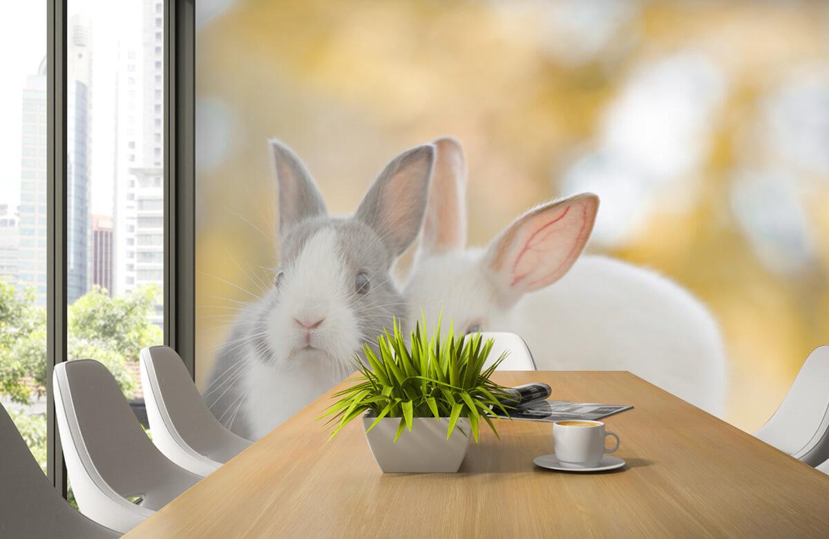 Wallpaper Close-up of rabbits 6