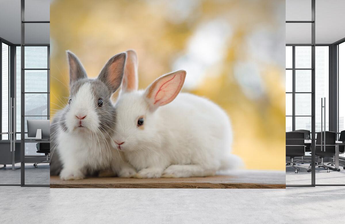 Wallpaper Close-up of rabbits 2