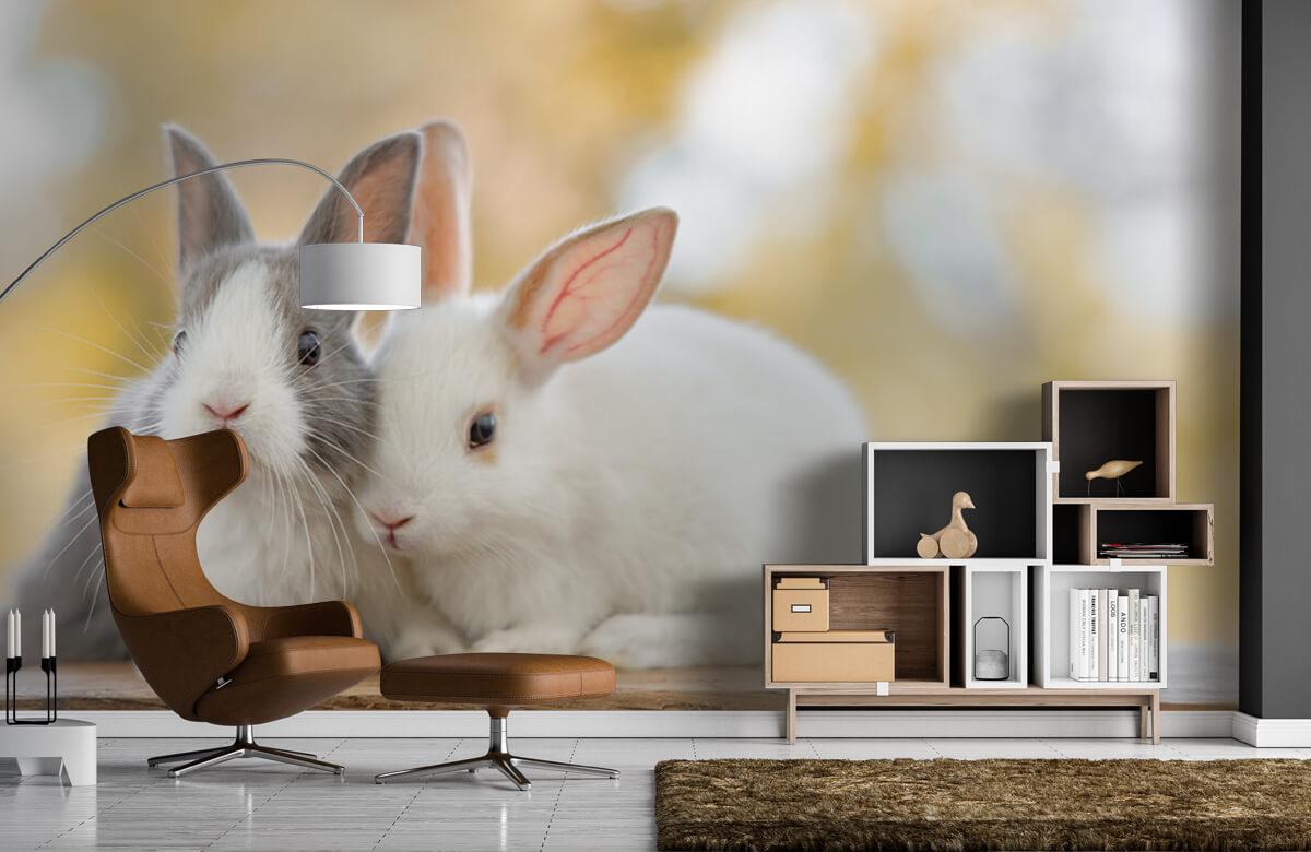 Wallpaper Close-up of rabbits 7