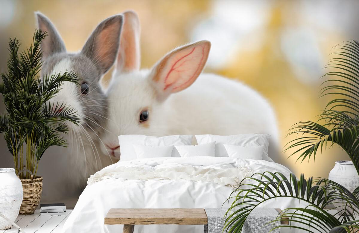 Wallpaper Close-up of rabbits 9