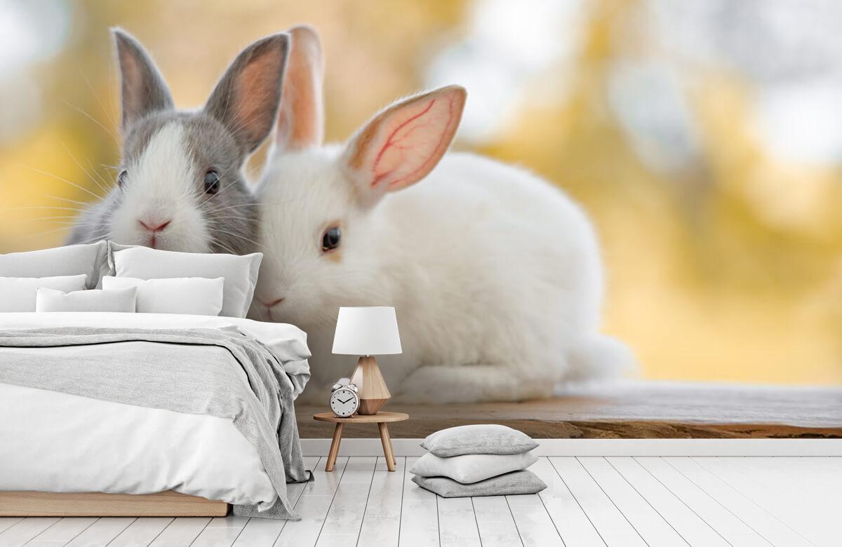 Wallpaper Close-up of rabbits 5