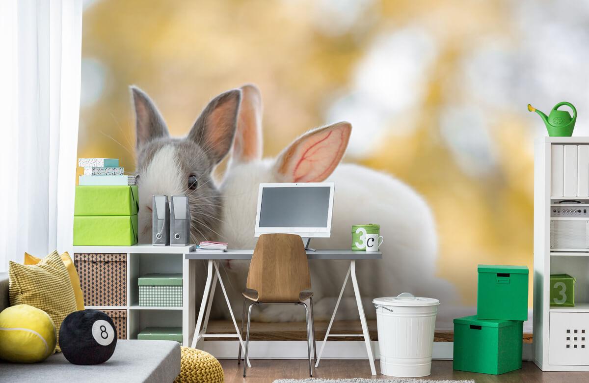 Wallpaper Close-up of rabbits 4