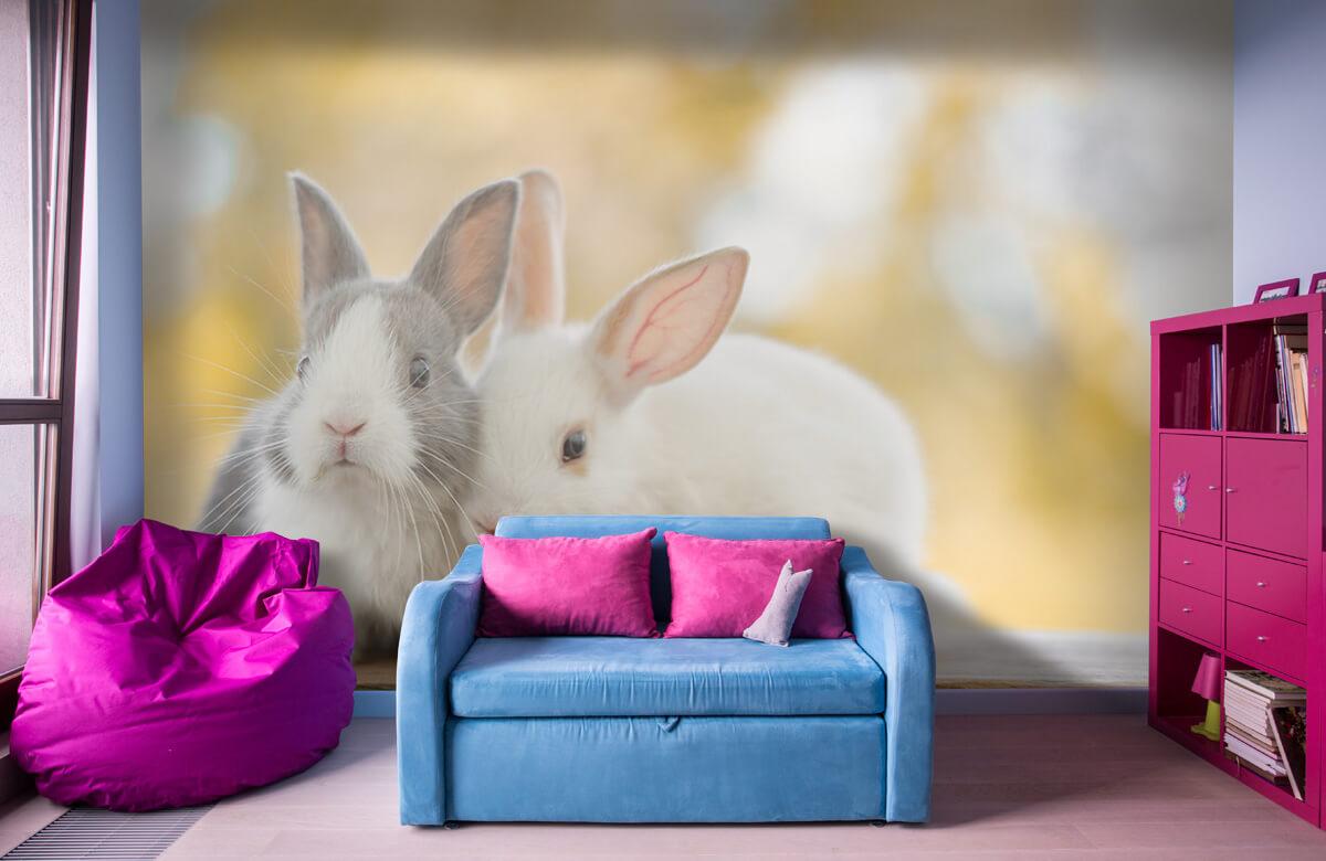 Wallpaper Close-up of rabbits 1