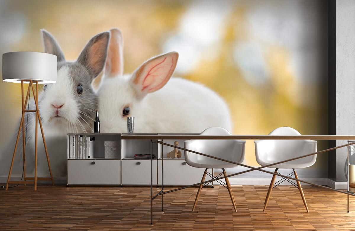 Wallpaper Close-up of rabbits 10