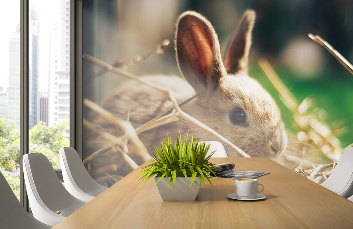 Wallpaper Rabbit in straw 7