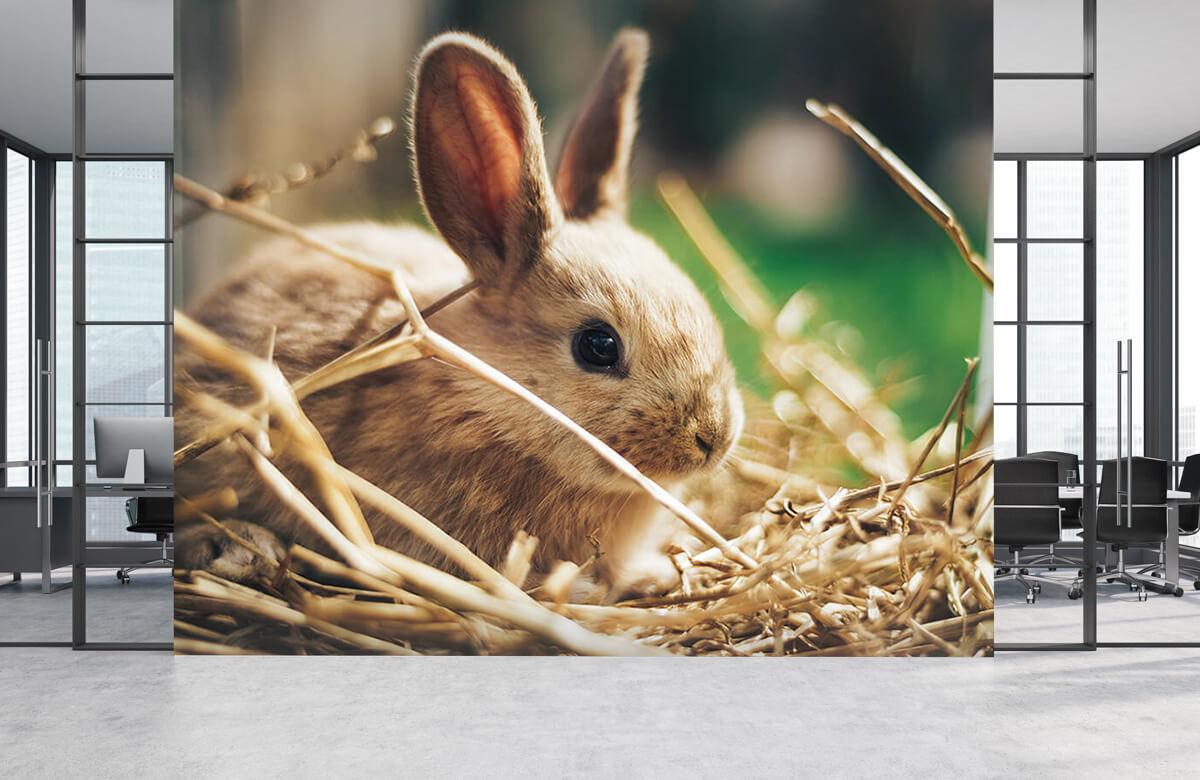 Wallpaper Rabbit in straw 6