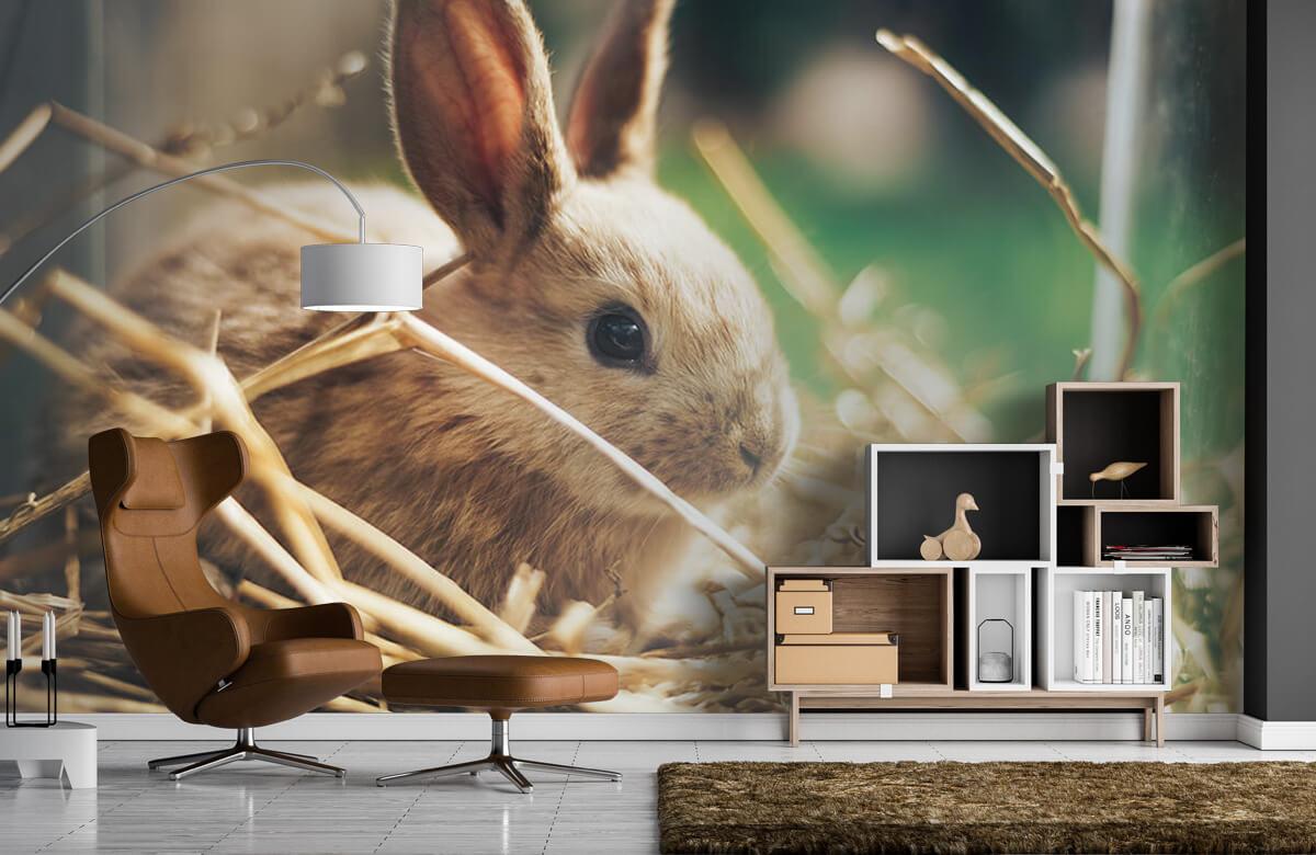 Wallpaper Rabbit in straw 9