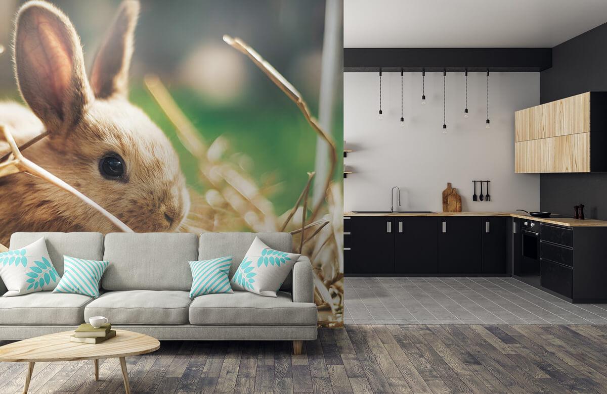 Wallpaper Rabbit in straw 10