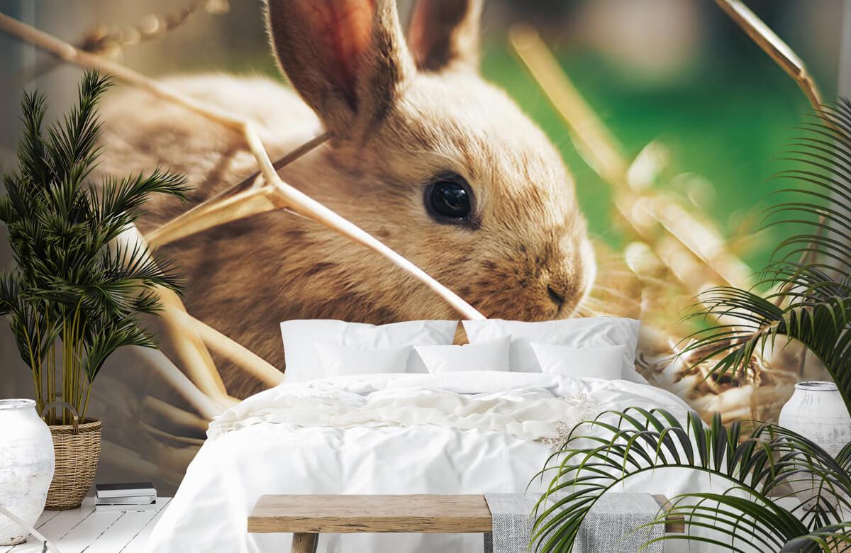 Wallpaper Rabbit in straw 4