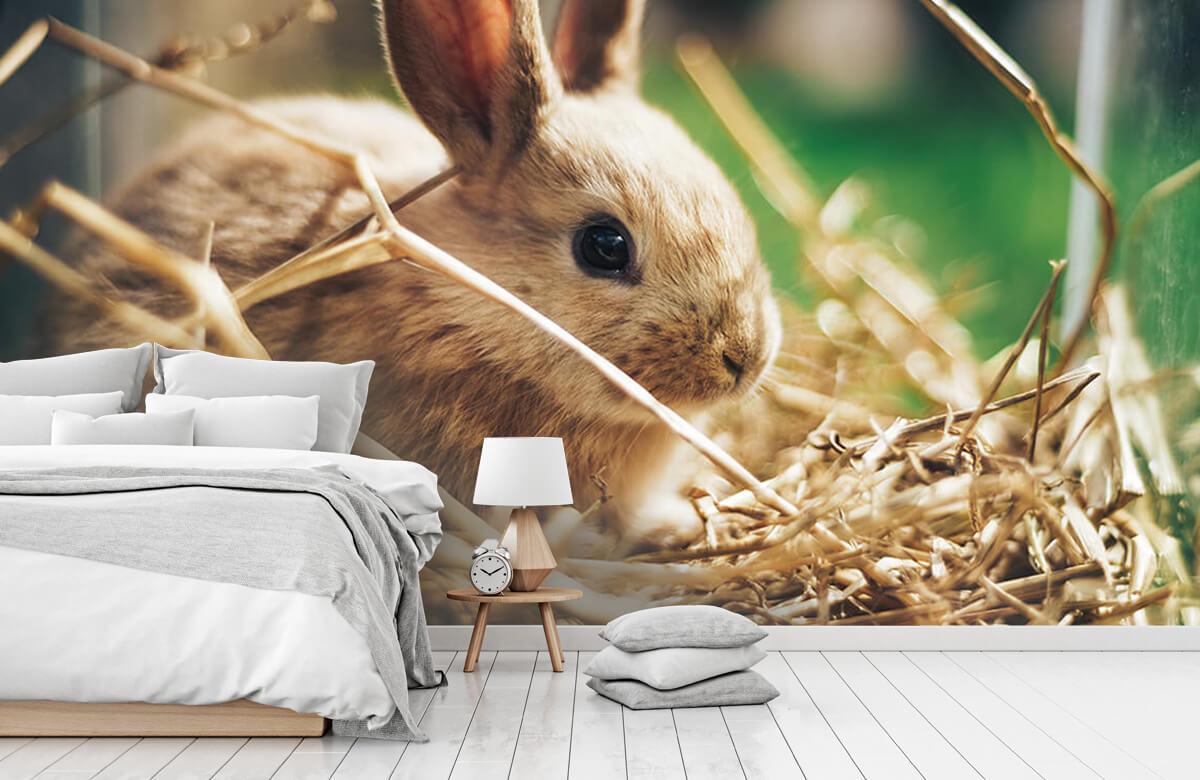 Wallpaper Rabbit in straw 8