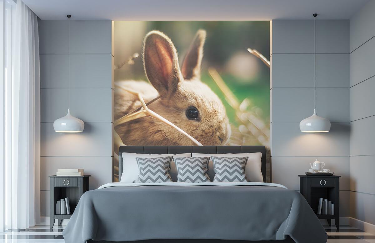 Wallpaper Rabbit in straw 11
