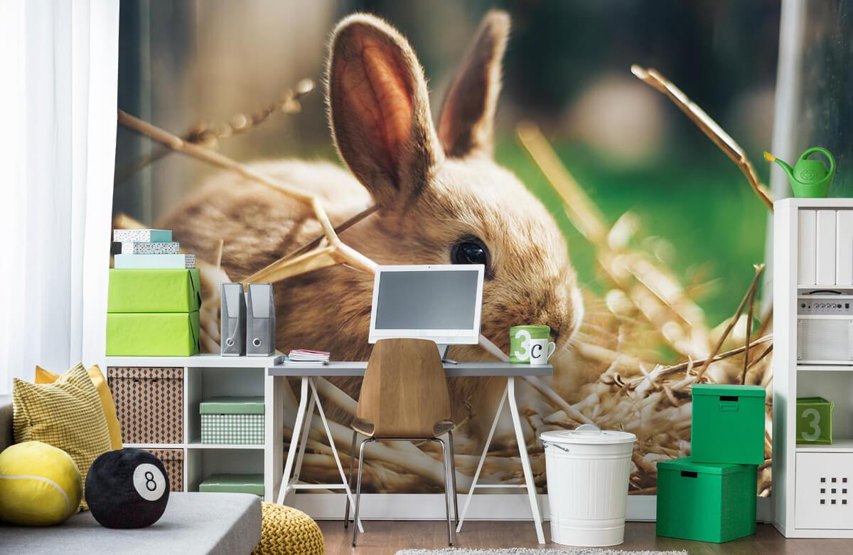 Wallpaper Rabbit in straw 3