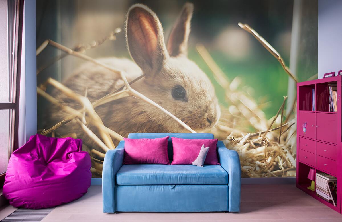 Wallpaper Rabbit in straw 1