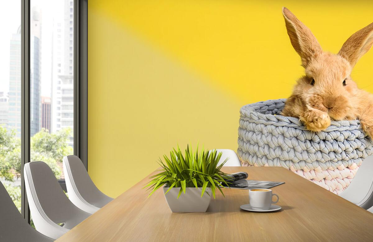 Wallpaper Rabbit in basket 6