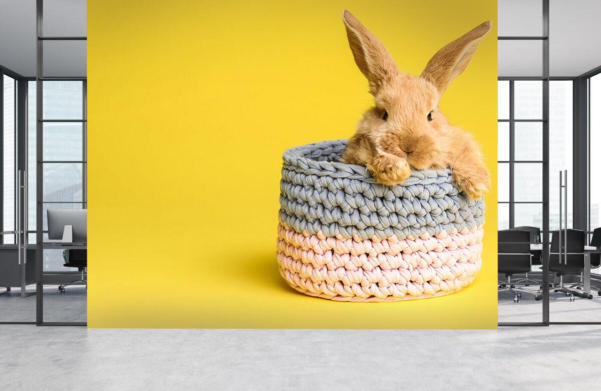 Wallpaper Rabbit in basket 7