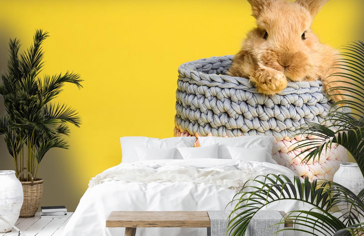 Wallpaper Rabbit in basket 5