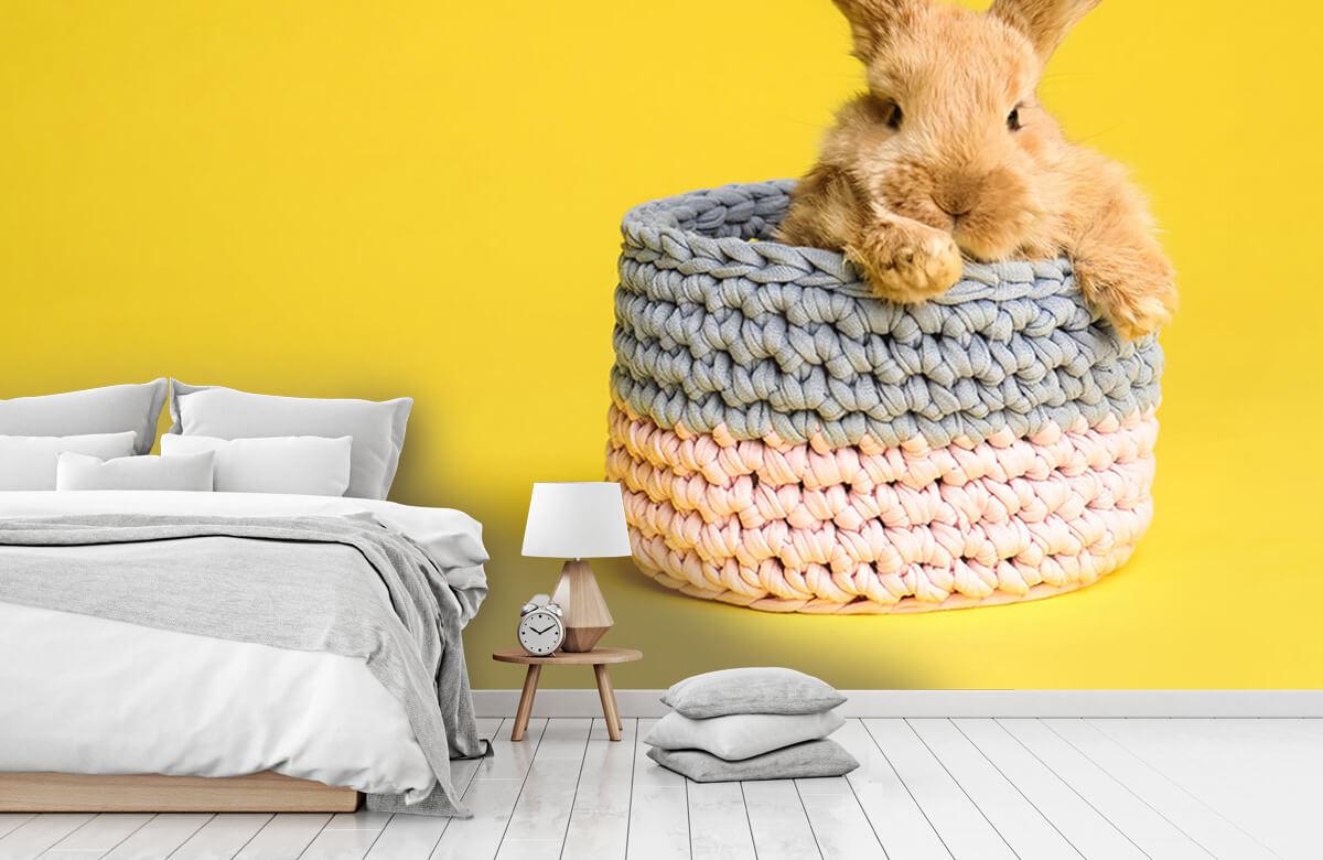 Wallpaper Rabbit in basket 8