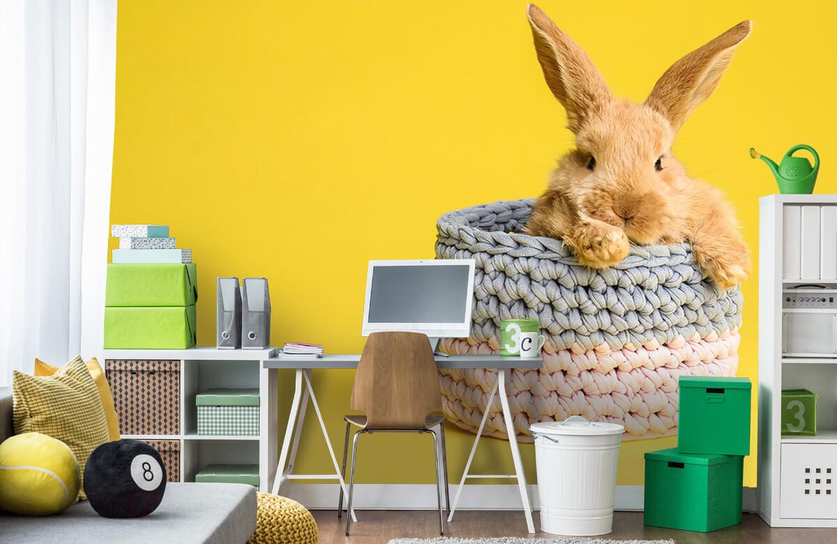 Wallpaper Rabbit in basket 1