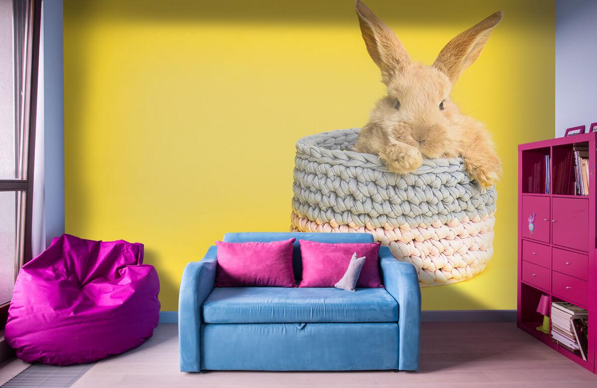 Wallpaper Rabbit in basket 4