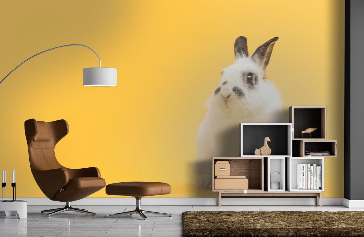 Wallpaper Posing rabbit 9