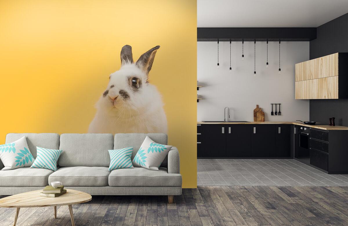 Wallpaper Posing rabbit 10