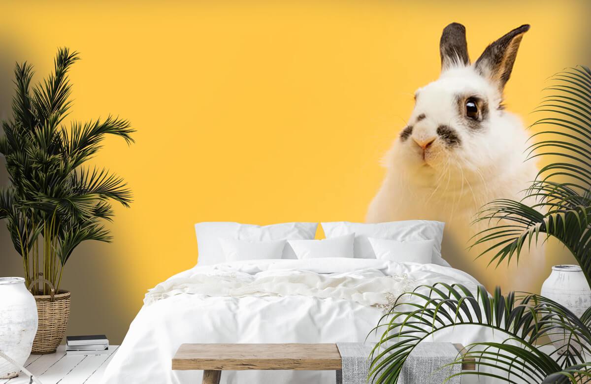 Wallpaper Posing rabbit 8