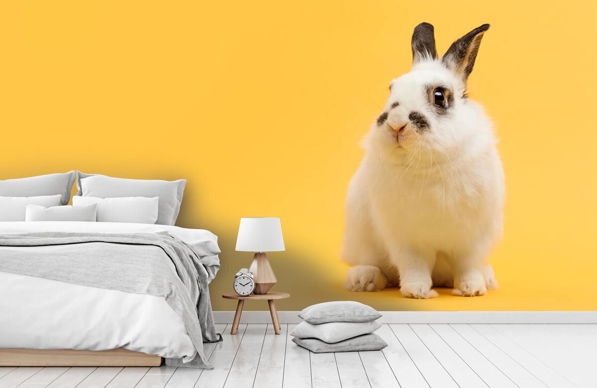 Wallpaper Posing rabbit 4