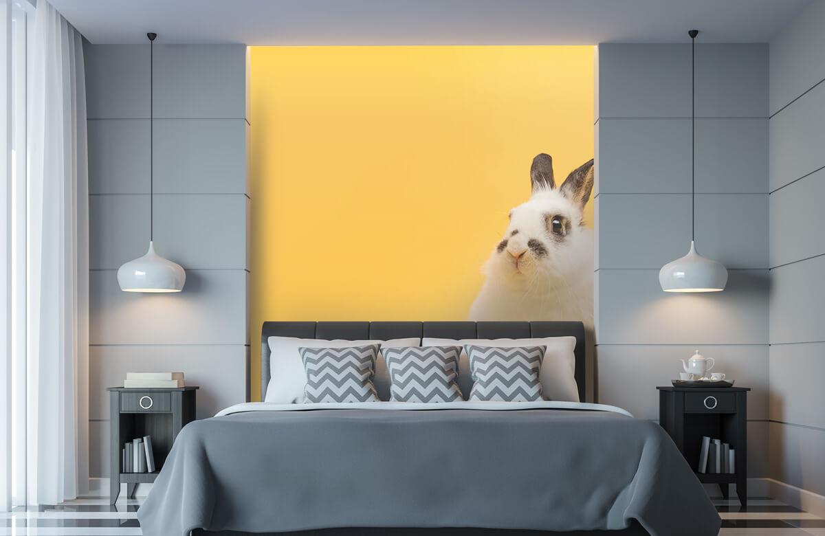 Wallpaper Posing rabbit 11