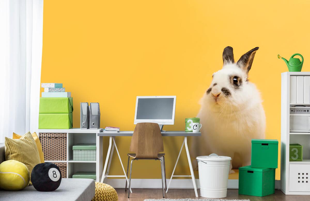 Wallpaper Posing rabbit 1
