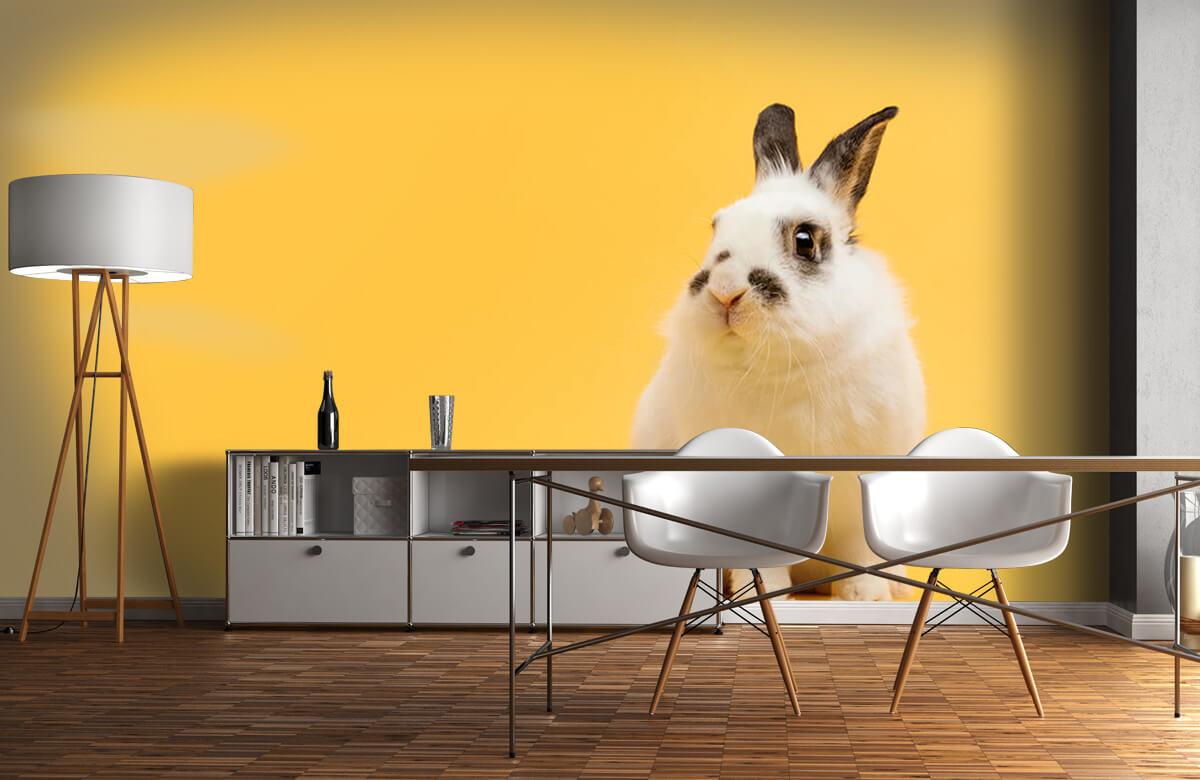 Wallpaper Posing rabbit 3