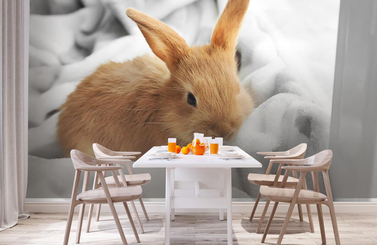 Wallpaper Brown rabbit 3