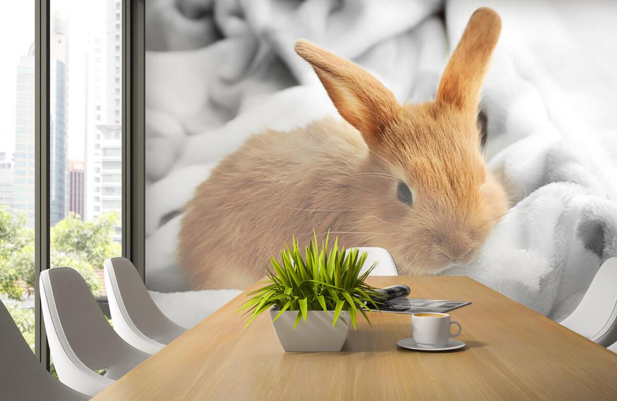 Wallpaper Brown rabbit 6