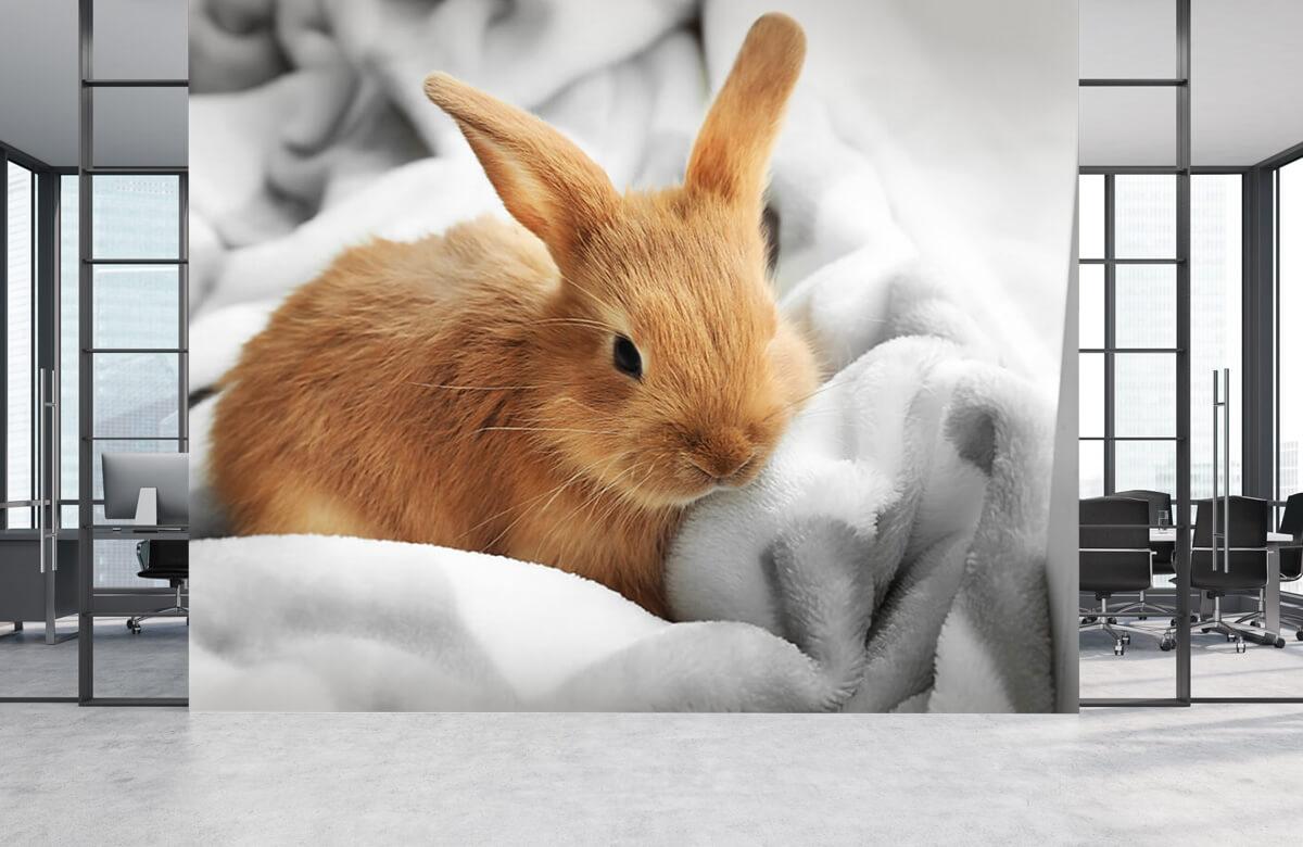 Wallpaper Brown rabbit 2