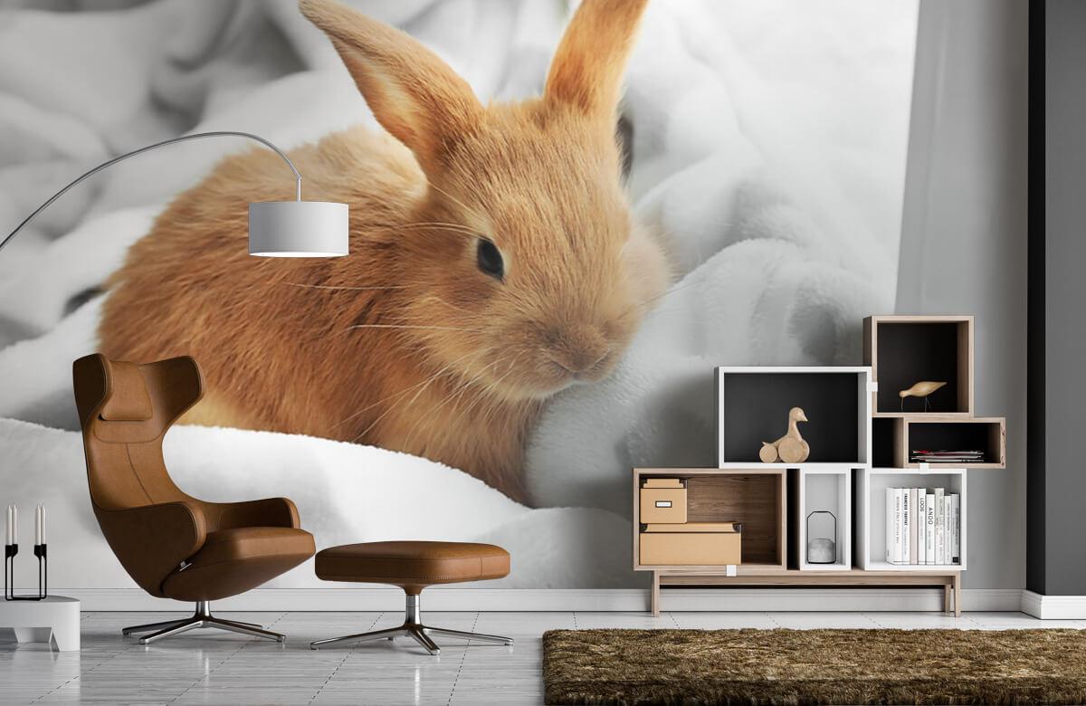 Wallpaper Brown rabbit 7