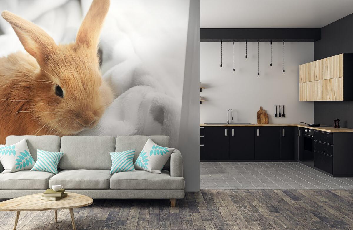 Wallpaper Brown rabbit 8