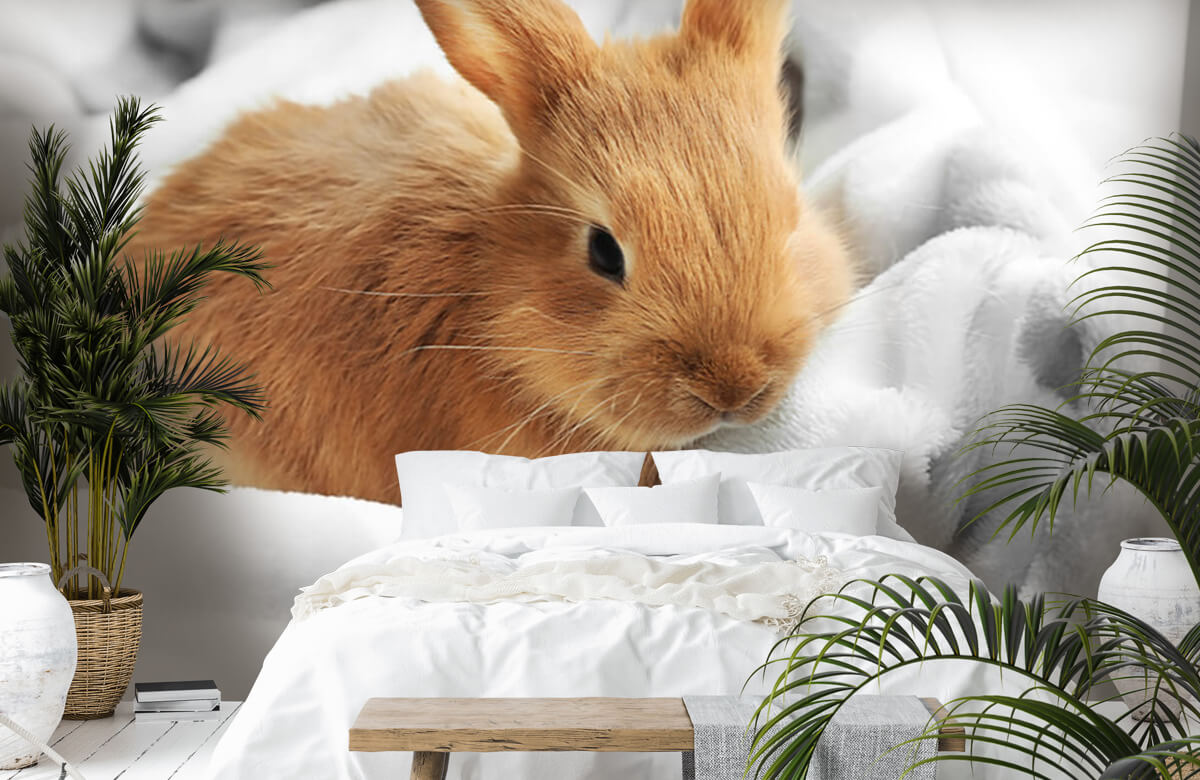 Wallpaper Brown rabbit 5