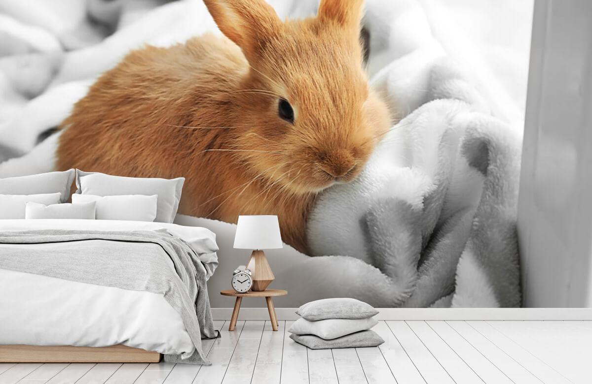 Wallpaper Brown rabbit 9