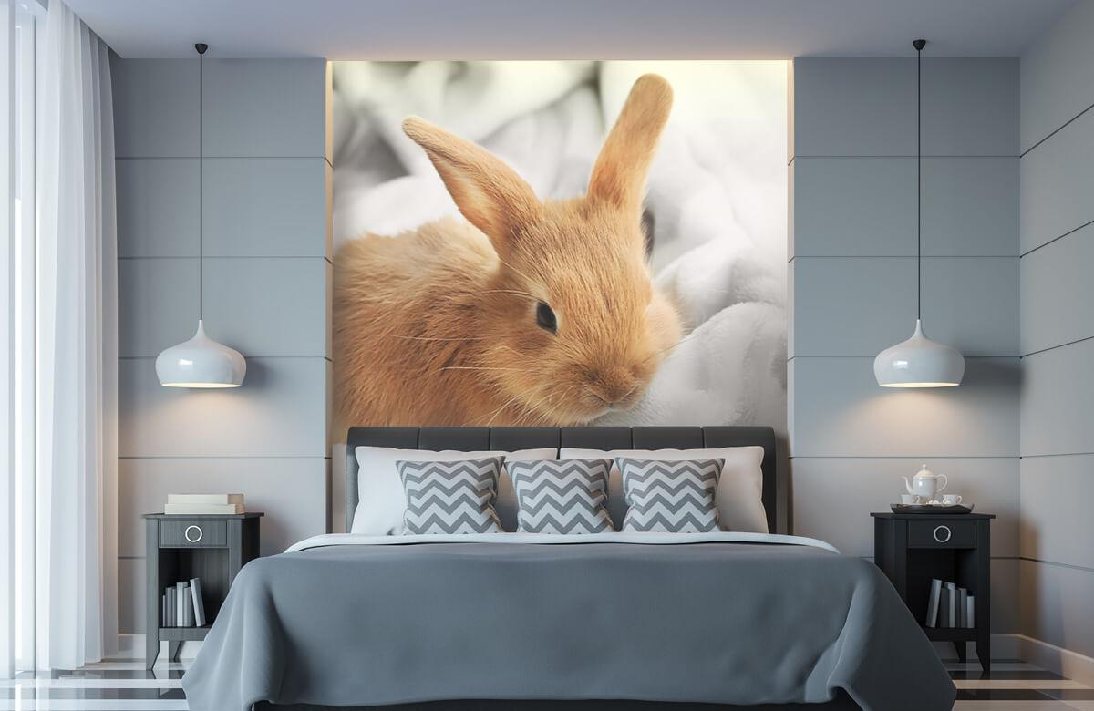 Wallpaper Brown rabbit 11